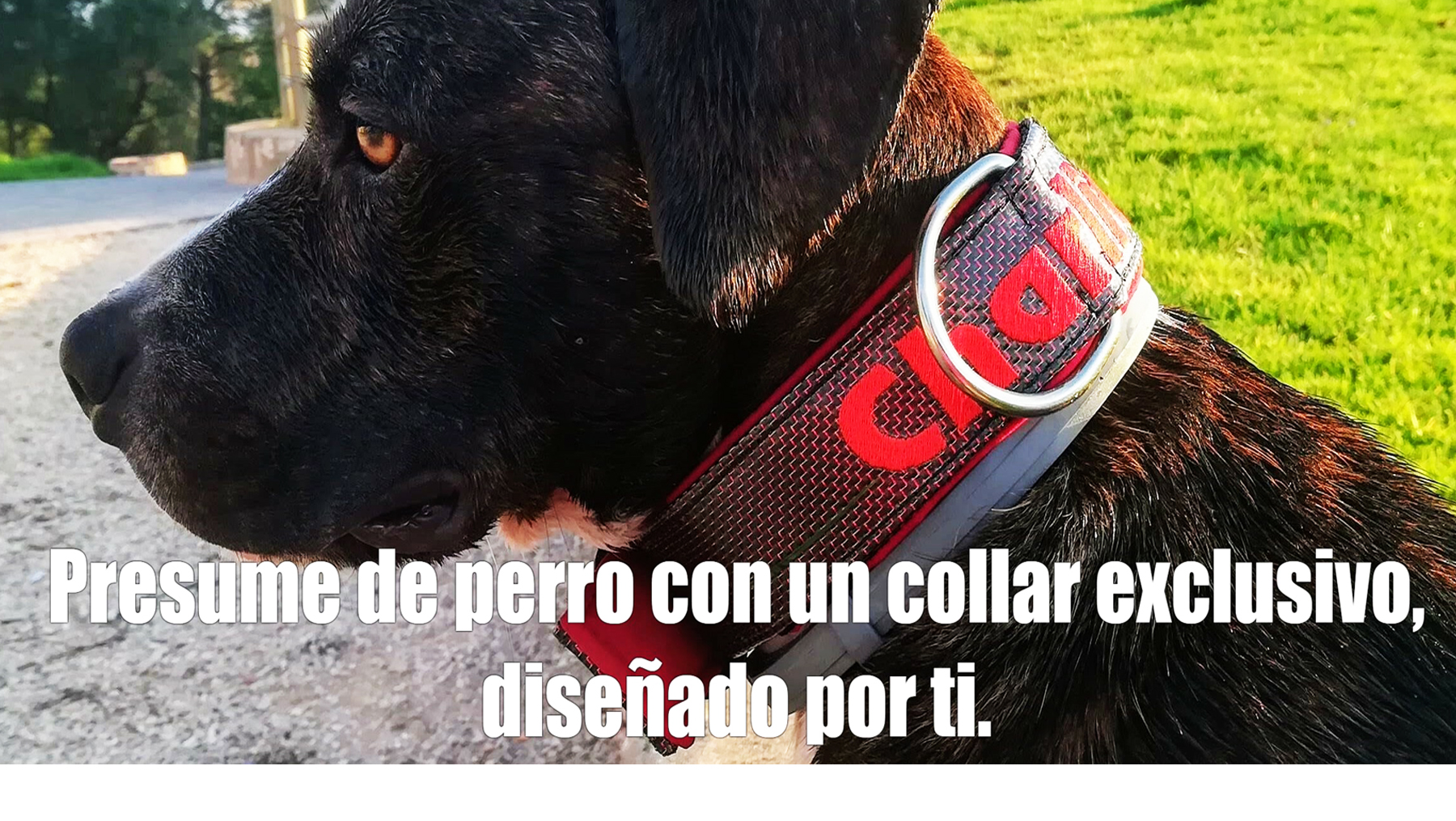 BANNER PORTADA CARBONO CHARLY 2